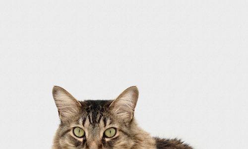【癒し動画】猫に歯ブラシマッサージが癒されまくったので集めてみた!